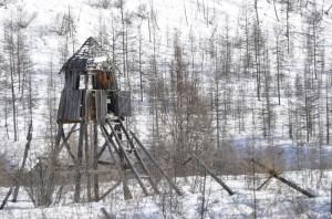 Bilet de lup - Romani deportati in Siberia - Stindard - Manuela Morar