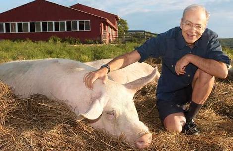 Peter Singer a pig in Bucharest