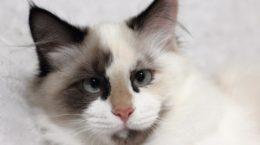 pisica-0017